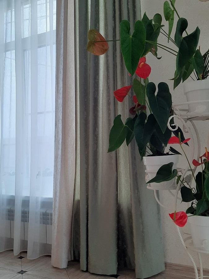 однотонные шторы в интерьере — современные тенденции